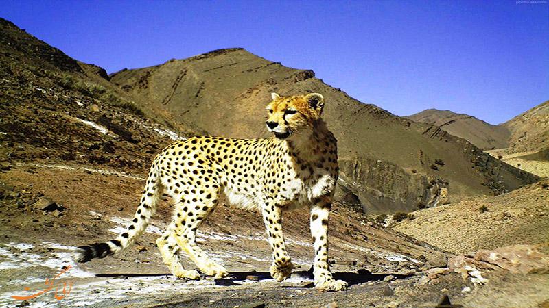 حیوانات پارک ملی سیاه کوه