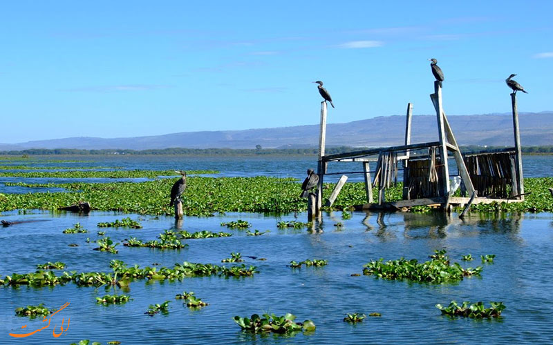 دریاچه نایواشا در کنیا