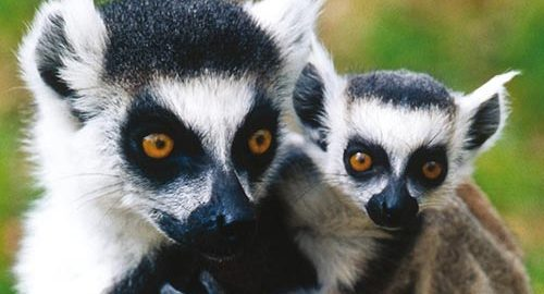 حیات وحش جزیره ماداگاسکار