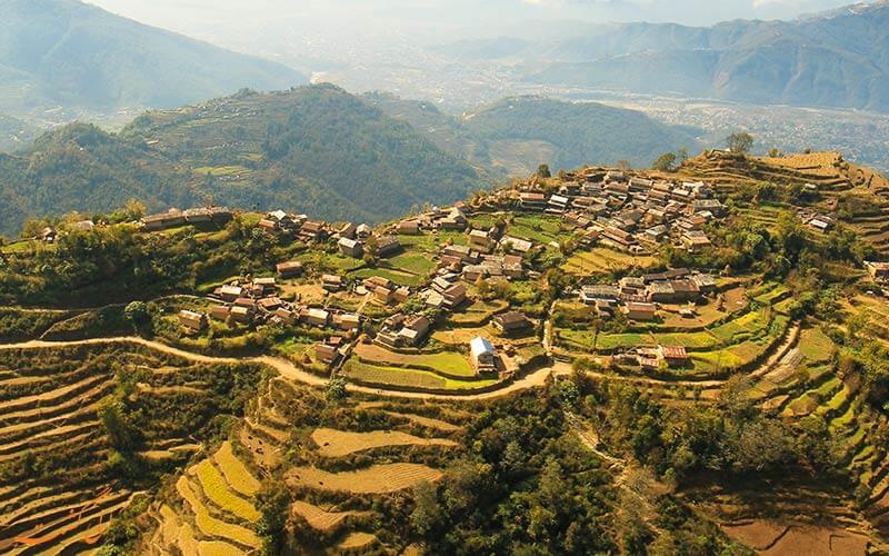 مزرعه چای در نپال