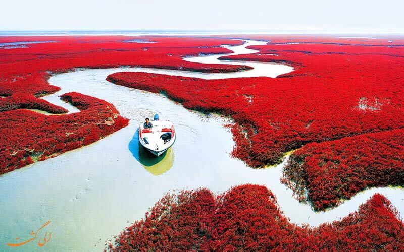 ساحل قرمز پانچین در کشور چین