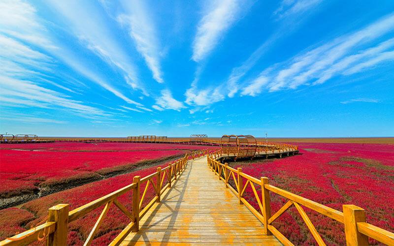 ساحل قرمز پانجین در چین
