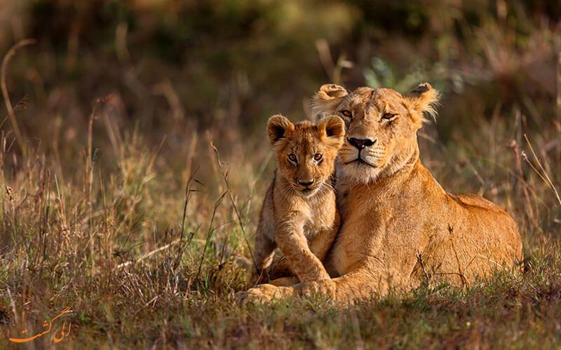 نکات سفر به کنیا