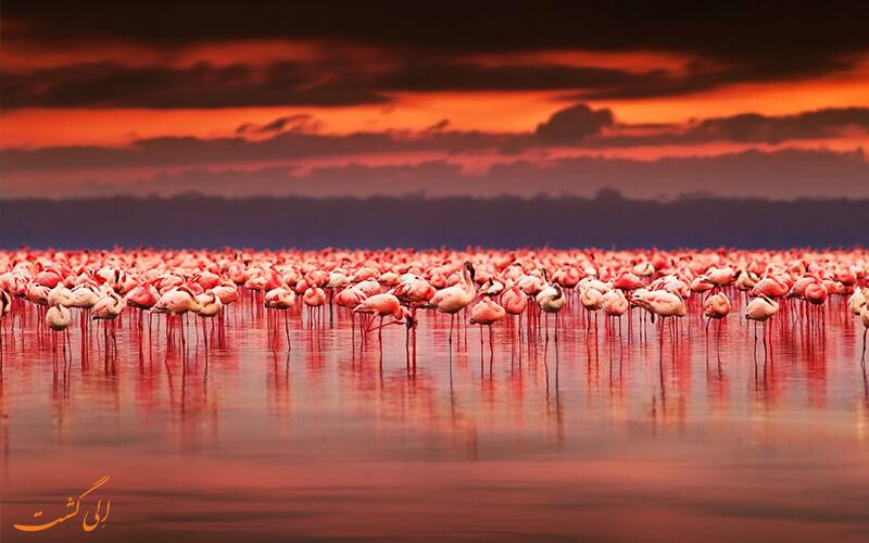دریاچه ناکورو کنیا