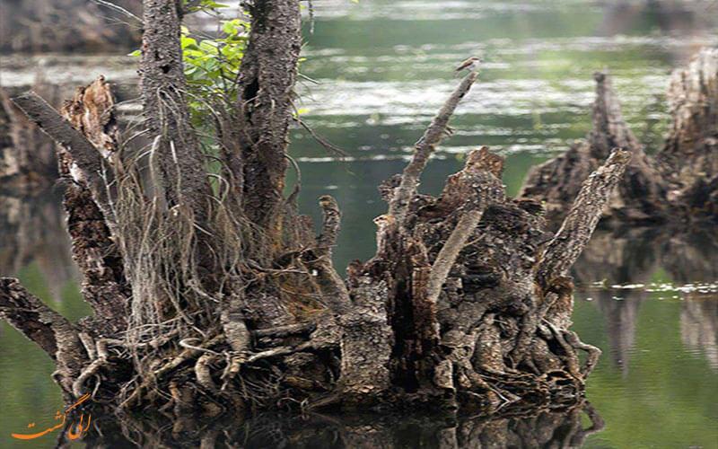 درختان دریاچه ی ارواح