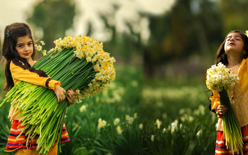 گل نرگس در استان بهبهان