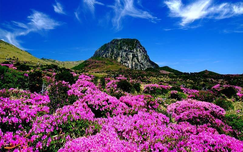 بهارهای رنگارنگ آتشفشان الاسال