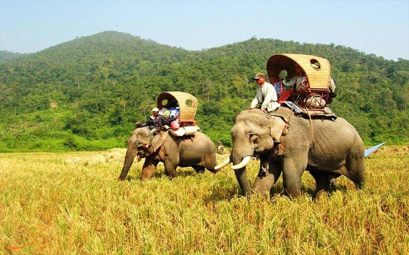 جشنواره ی فیل سواری در لائوس