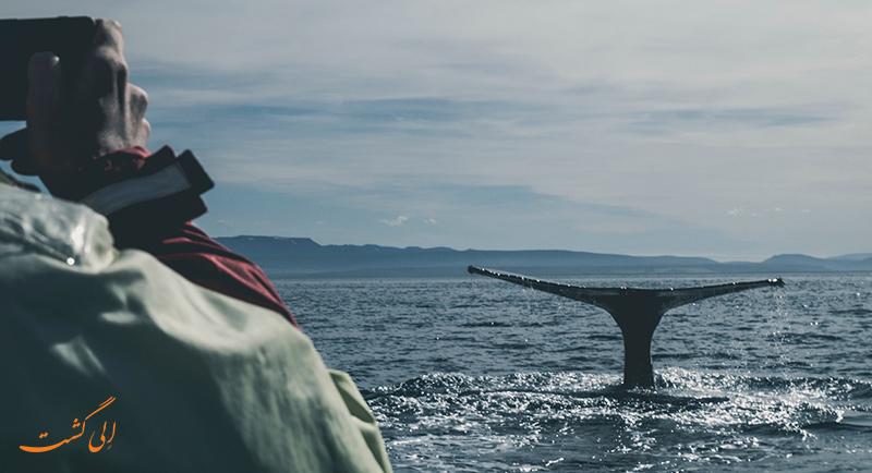 تماشای وال در ایسلند