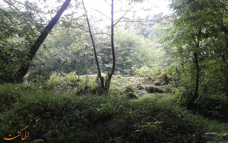 جنگل های مرموز انزلی