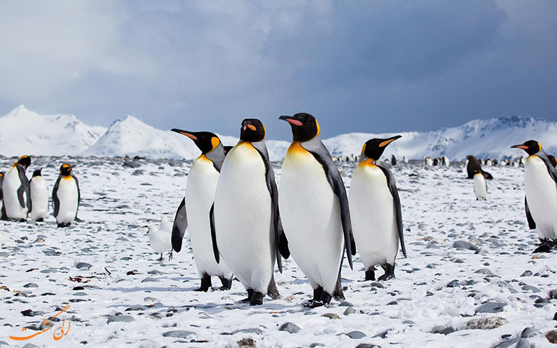 پنگوئن در قطب جنوب