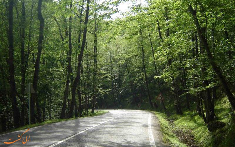 جنگل دو هزار و سه هزار