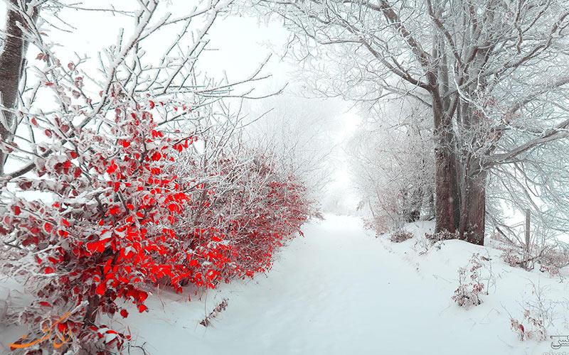روز زیبای برفی