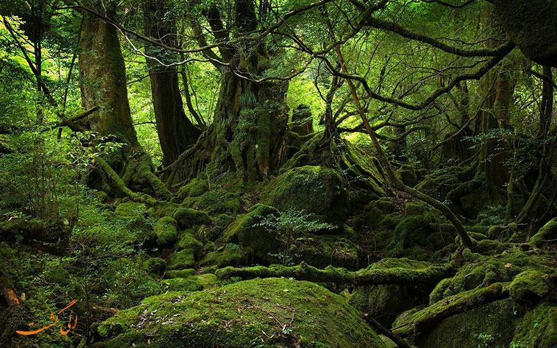 جنگل آکیوگاهارا