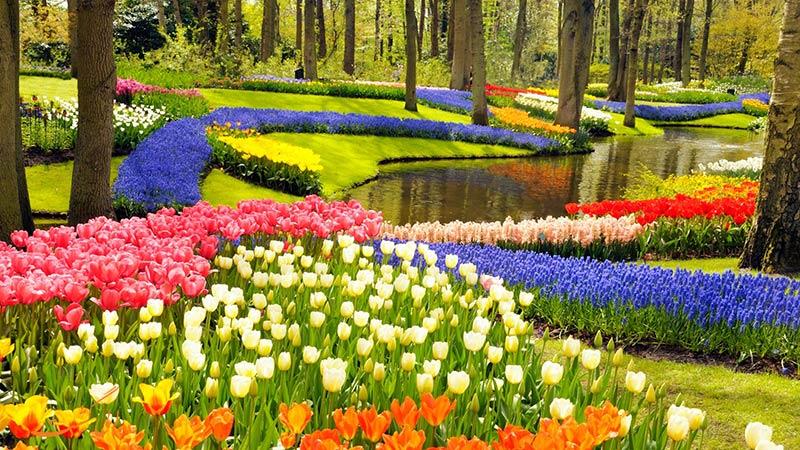 باغ گل کوکنهوف در هلند