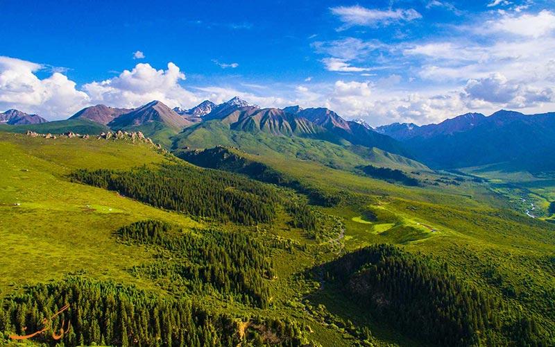 چمن زارهای کوه Qilian