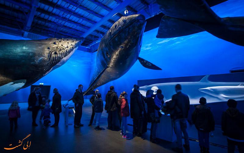 نهنگ های کوهان دار ریکیاویک