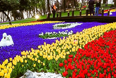 جشنواره گل لاله در استانبول