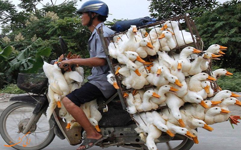 موتور سواری در ویتنام