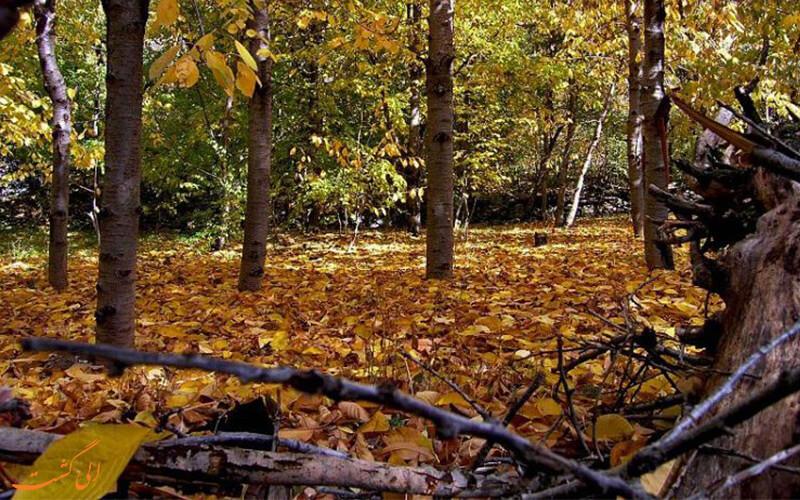 پاییز در روستای آهار