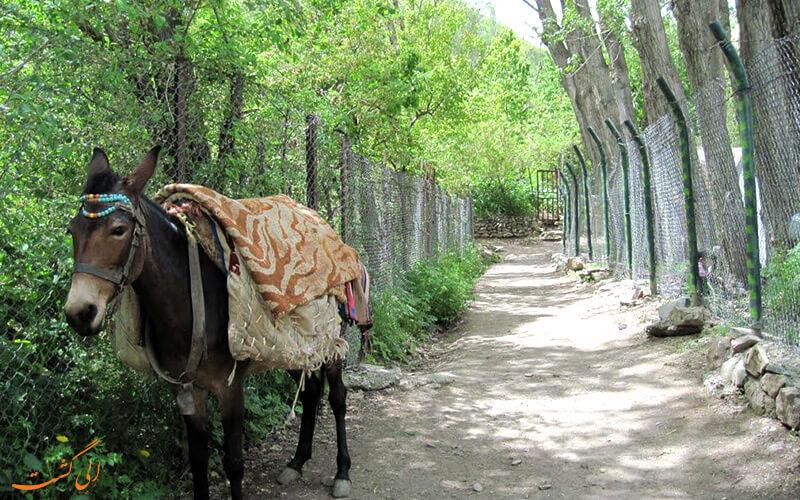 مسیر پیاده روی روستای آهار