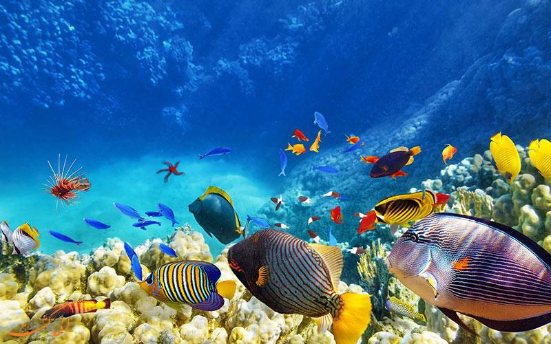 گوناگونی جانوران آبی در گودال آبی بلیز