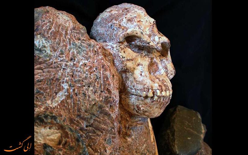 فسیل 3/6 میلیون ساله
