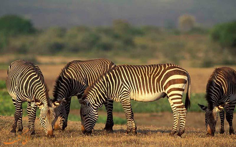 طبیعت آفریقای جنوبی