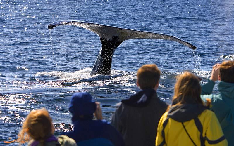 نهنگ های آفریقای جنوبی