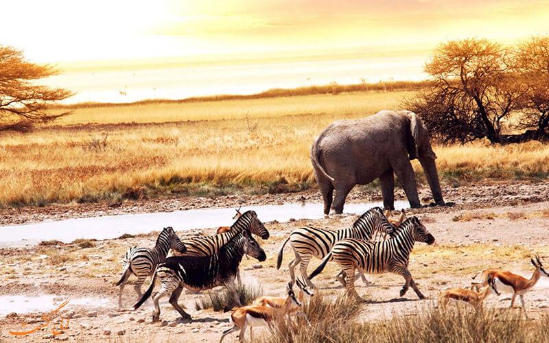 حیات وحش کشور آفریقای جنوبی