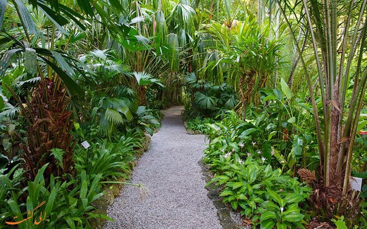 باغ ادویه