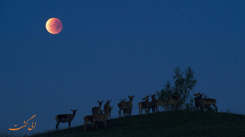 ماه قرمز رنگ در آلاسکا