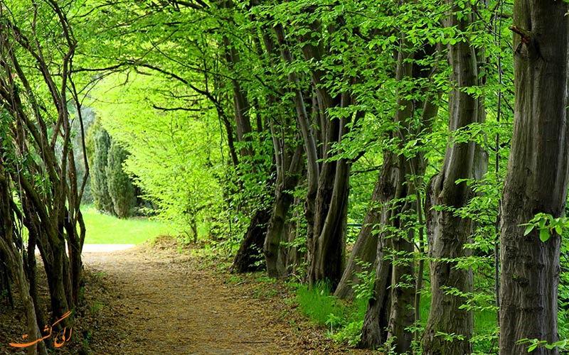 جنگل های هیرکانی، زیباترین جنگل شمال
