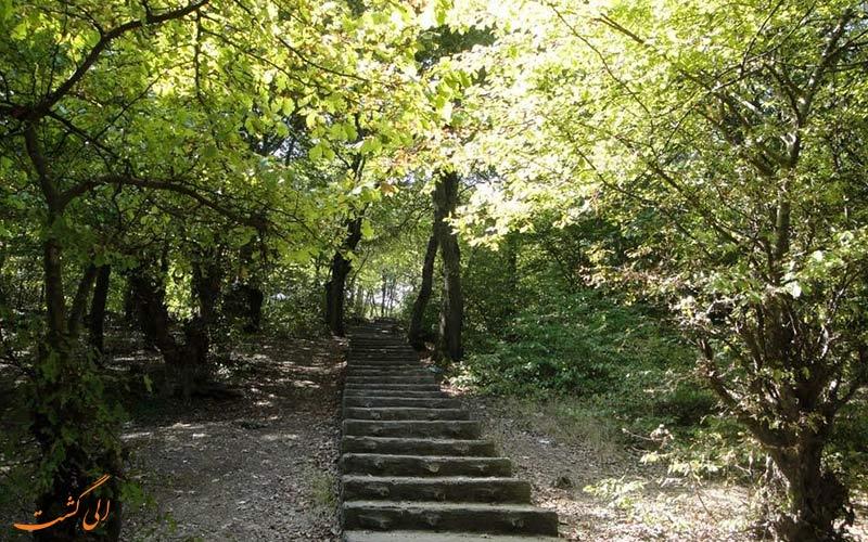 پارک شهید زارع از زیباترین جنگل های ساری