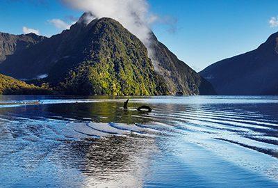 راهنمای سفر به نیوزلند