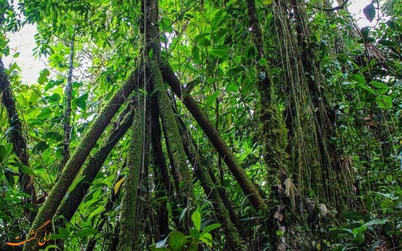درختانی عجیب دنیا