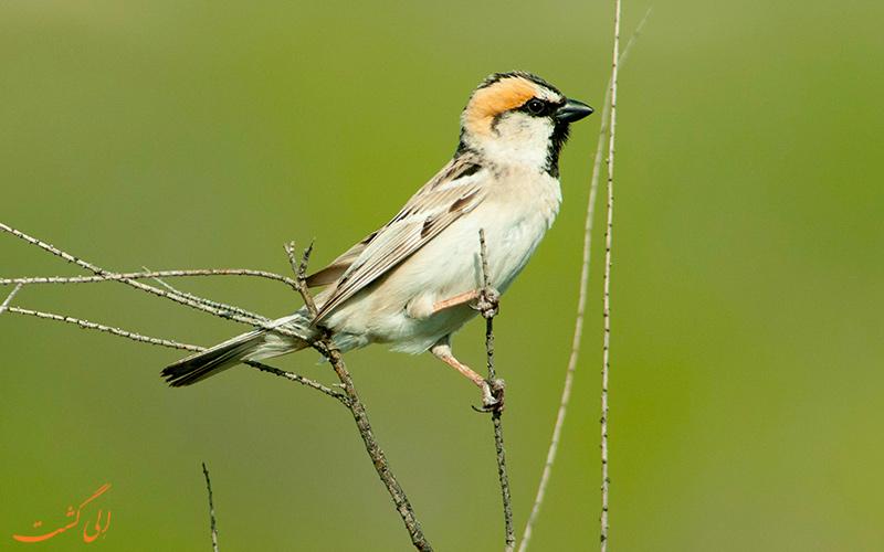 پارک ملی حفاظت شده کورگالژین