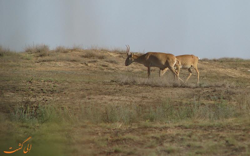 پارک ملی حفاظت شده آستانه