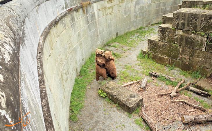 گودال خرس ها در برن