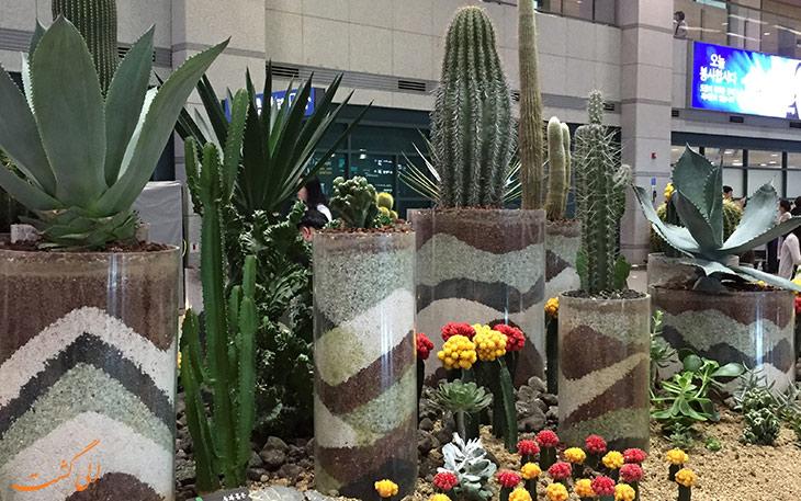 باغ کاکتوس از جاذبه های گردشگری فرودگاه اینچئون