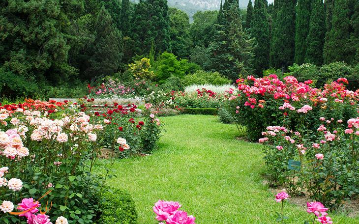 باغ رز برن