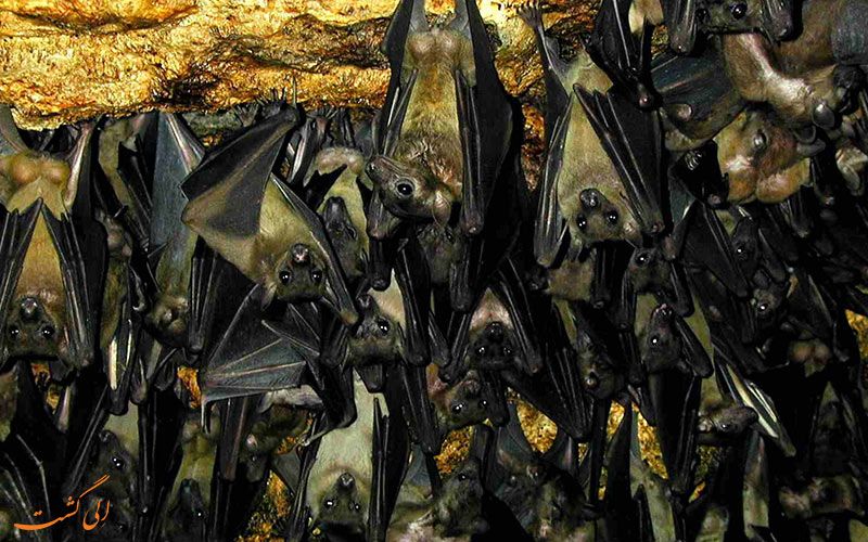 غار-خفاش