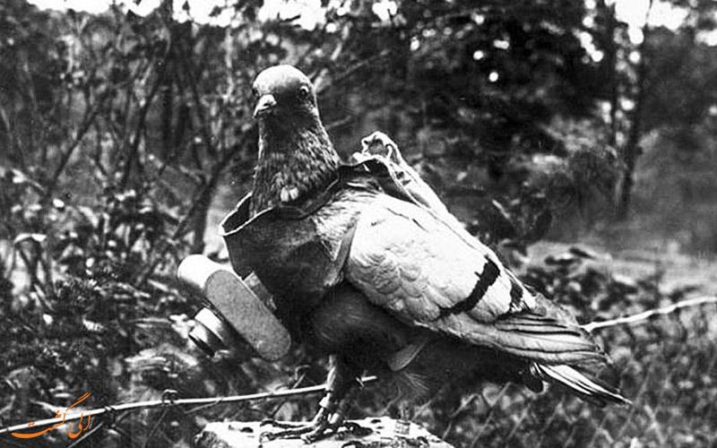 عکس یک کبوتر عکاس
