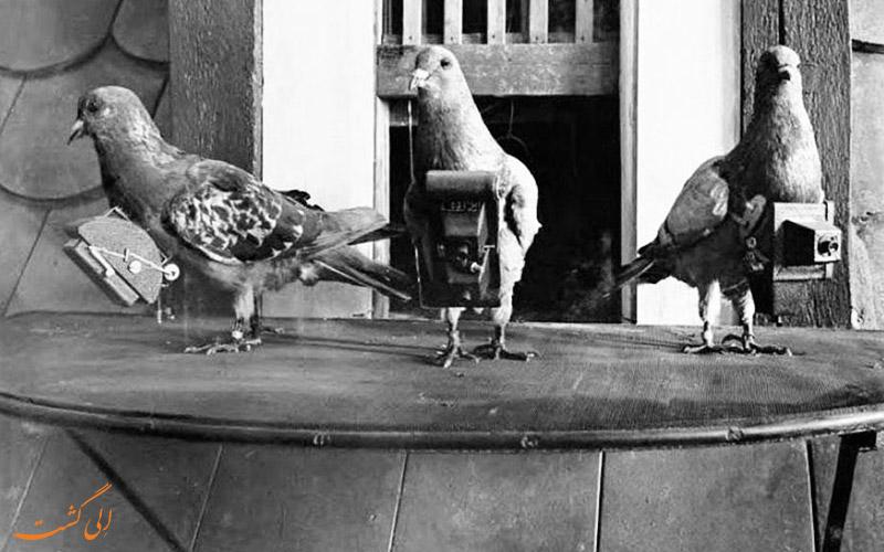 کبوترهای عکاس