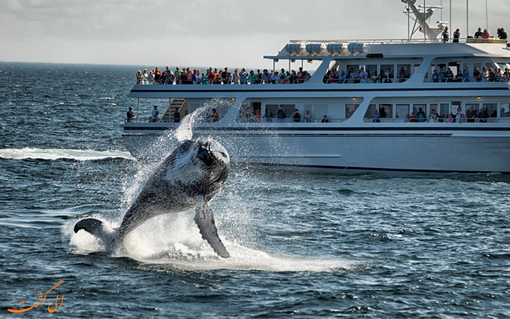 مشاهده نهنگ در ایسلند