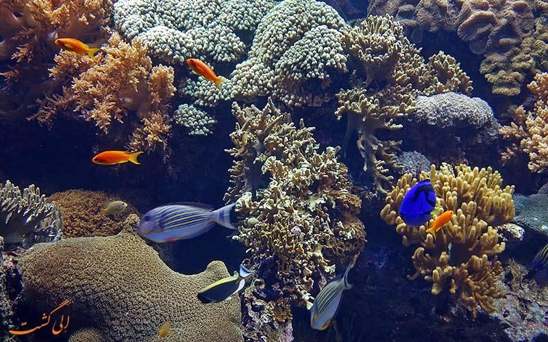 تماشای دنیای زیر آب
