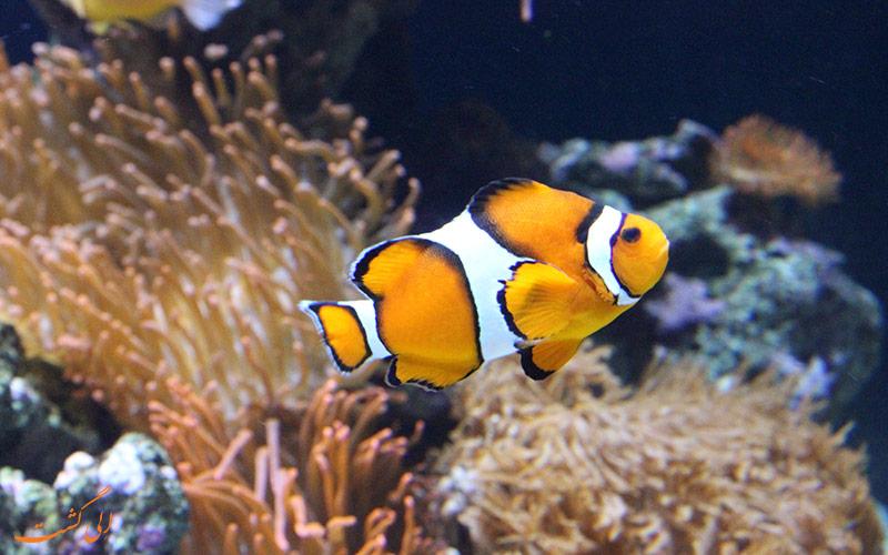 ماهی های رنگارنگ