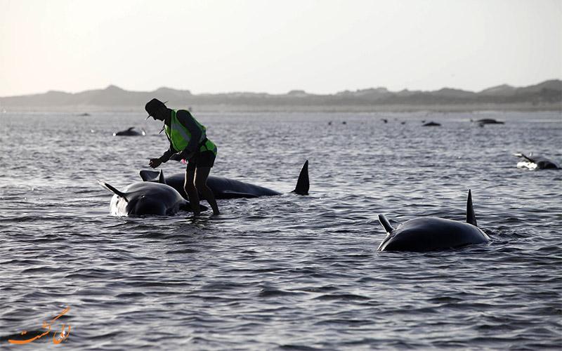 خودکشی نهنگ ها و وال ها