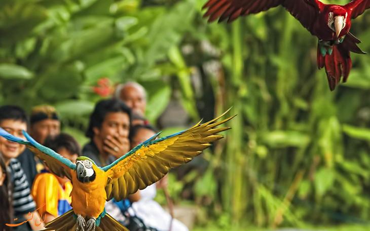 پارک پرندگان