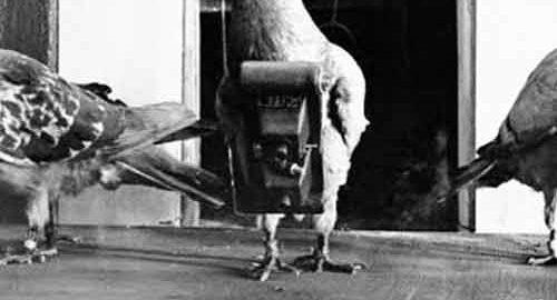 تکنولوژی عکاسی توسط کبوتر